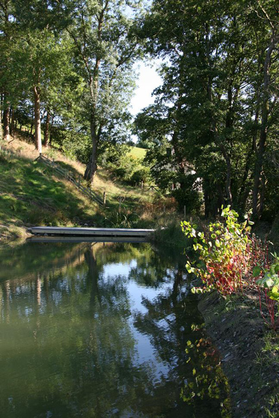 Magical secluded woodland swimming pond, firm favourite with the children of the family